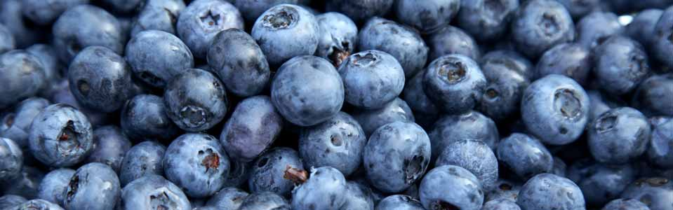 HEALTHY BILBERRIES