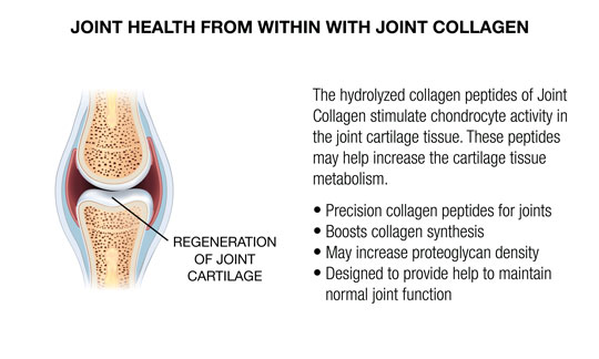 CARTILAGE PROTEIN