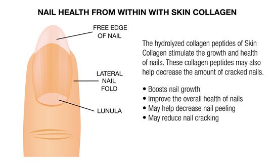 NAIL HEALTH WITH SKIN COLLAGEN